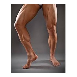 Demi Jambes / Cuisses